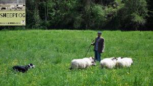 dimostrazione-sheepdog-casavaikuntha21