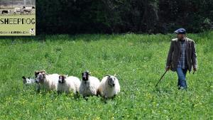 dimostrazione-sheepdog-casavaikuntha22