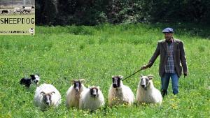 dimostrazione-sheepdog-casavaikuntha23