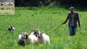 dimostrazione-sheepdog-casavaikuntha24