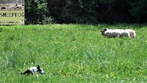 dimostrazione-sheepdog-casavaikuntha30