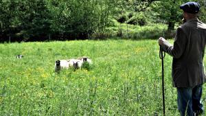 dimostrazione-sheepdog-casavaikuntha32