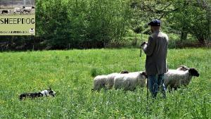 dimostrazione-sheepdog-casavaikuntha36