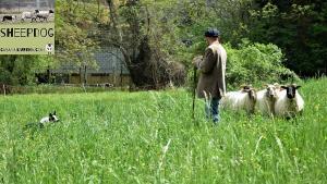 dimostrazione-sheepdog-casavaikuntha42