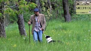 dimostrazione-sheepdog-casavaikuntha43