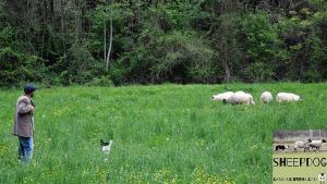 dimostrazione-sheepdog-casavaikuntha44