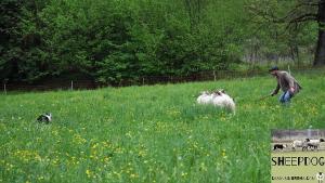 dimostrazione-sheepdog-casavaikuntha50