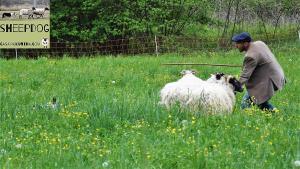 dimostrazione-sheepdog-casavaikuntha51