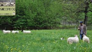 dimostrazione-sheepdog-casavaikuntha55