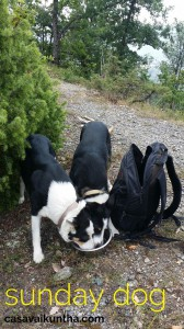 dog-trekking-acqua-per-cani