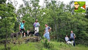 dog-trekking-didattico-casavaikuntha