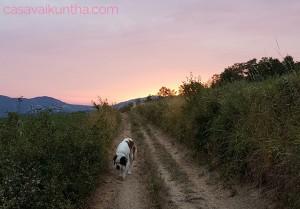 dog-trekking-val-curone