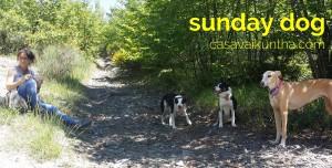 dog-trekking46
