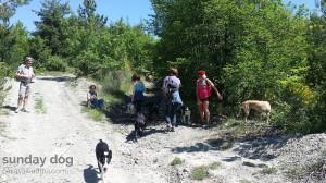dog-trekking47