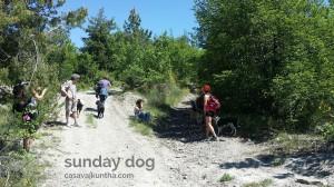 dog-trekking48