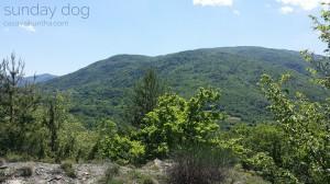 dog-trekking49