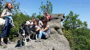 dog-trekking54