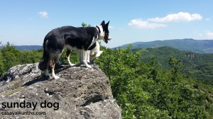 dog-trekking56