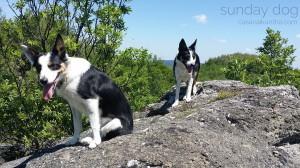 dog-trekking57