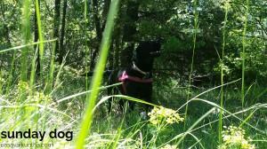 dog-trekking59