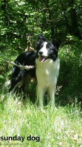 dog-trekking62