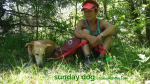 dog-trekking63