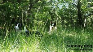 dog-trekking64