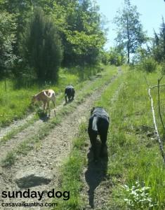 dog-trekking65