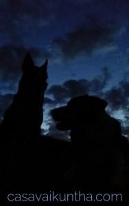 notte-profili-bordercollies