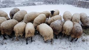pecore-neve-casavaikuntha1
