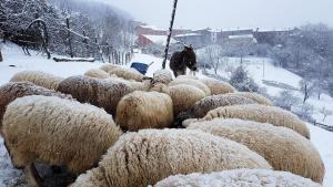pecore-neve-casavaikuntha3