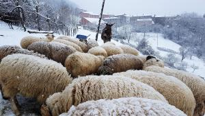 pecore-neve-casavaikuntha4