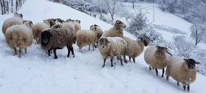 pecore-neve-casavaikuntha5