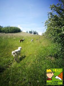 stage-casavaikuntha-dog-trekking1