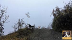 stage-con-il-mio-cane-senza-paura-primo-giorno-casavaikuntha1