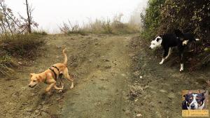 stage-con-il-mio-cane-senza-paura-primo-giorno-casavaikuntha3