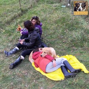 stage-con-il-mio-cane-senza-paura-secondo-giorno-casavaikuntha9