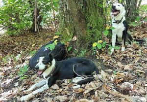 stage-in-viaggio-con-il-cane-casavaikuntha-dog-training11
