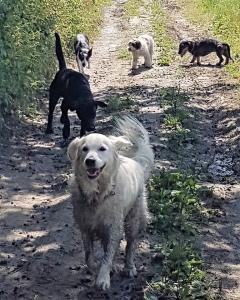 stage-in-viaggio-con-il-cane-casavaikuntha-dog-training5
