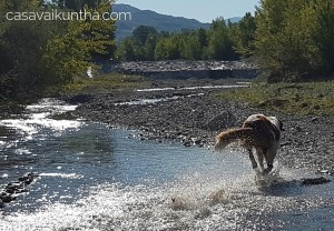 vacanza-con-cane